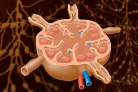 15.12.2021: Naturheilkundliche Therapieoptionen bei Erkrankungen des Lymphsystems